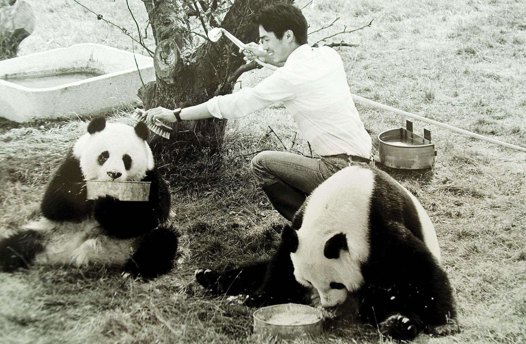 beekse-bergen-safari-panda-bezoek.jpg