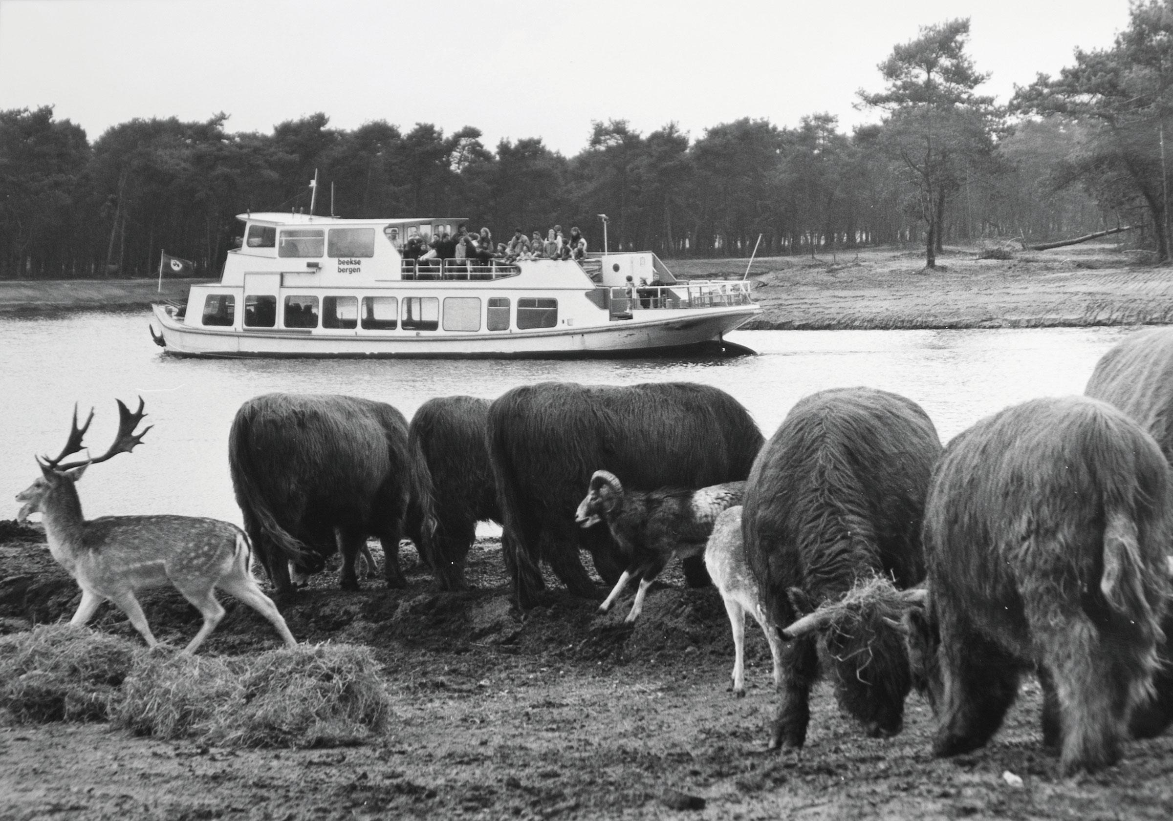 eerste-bootsafari-livingstone-schotse-hooglanders.jpg