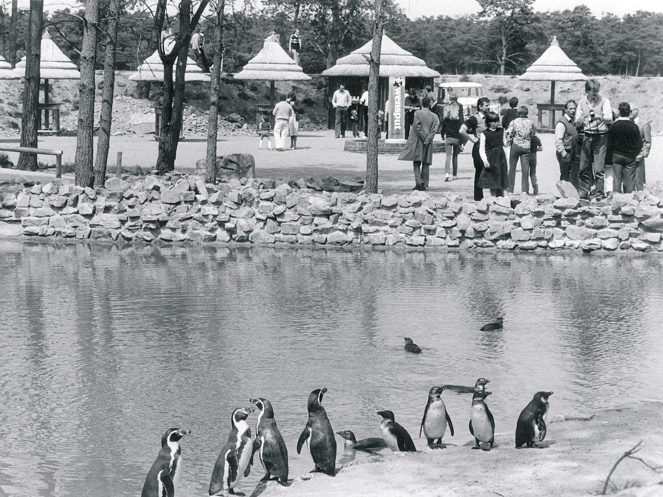 eerste-wandelsafari-pinguin-oud-1982.jpg