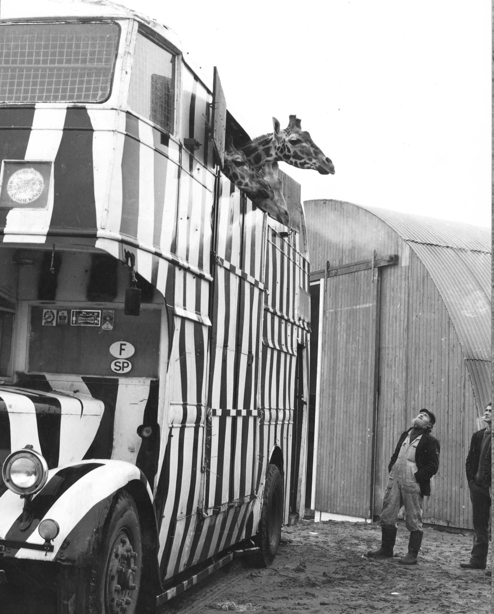 giraffen-oud-dubbeldekker-1973.jpg
